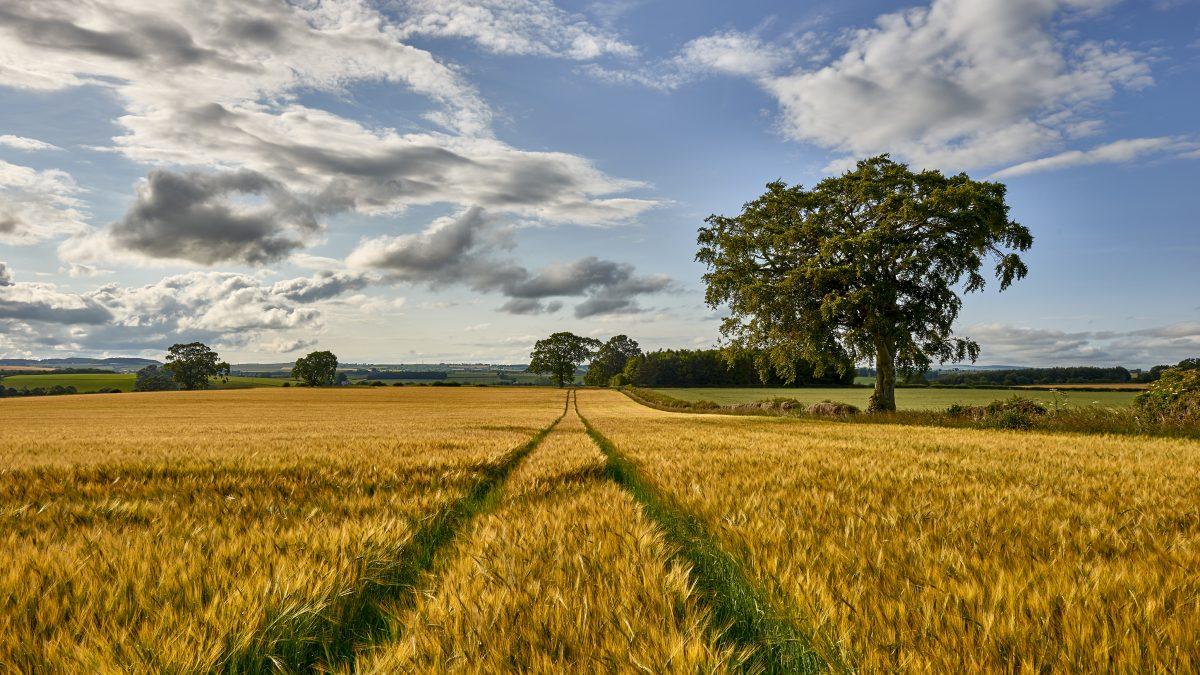 Satellite mapping programme 'predicts' what crops are grown in Scotland